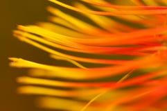 wibrująca tło roślina Fotografia Royalty Free