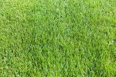 wibrująca trawy zieleń Zdjęcia Stock