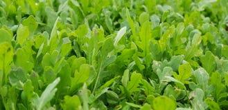 Wibrująca Zielona flora obrazy stock