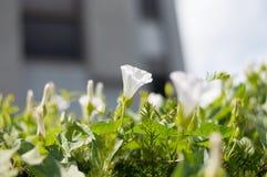 Wibrujący Biały kwiat Obraz Stock