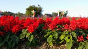 Wibrujący czerwień kwiaty Fotografia Royalty Free