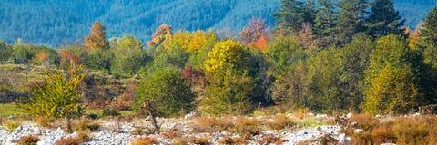 Wibrujący jesieni panoramy tło z kolorowym Fotografia Stock