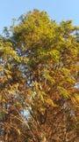 Wibrujący kolorów drzewa z słońcem i promieniami obrazy royalty free
