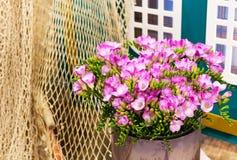 Wibrujący kwiatu bukiet różowy alstroemeria tło obraz royalty free