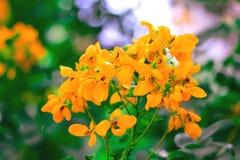 WIBRUJĄCY MALI kolorów żółtych kwiaty obraz royalty free