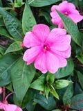 Wibrujący purpura kwiat zdjęcie royalty free