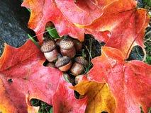 Wibrujący spadków Colours fotografia stock