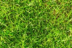Wibrujący zielonej trawy tło Zielonej trawy pola fotografii tekstura Zdjęcie Stock