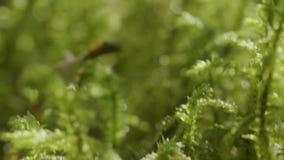 Wibrujący zielonej trawy zakończenie zamyka trawy zieleni macro zieleń głębii rosy pola trawy przesmyk zbiory