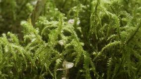 Wibrujący zielonej trawy zakończenie zamyka trawy zieleni macro zieleń głębii rosy pola trawy przesmyk zbiory wideo