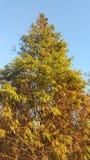 Wibrujący kolory z drzewami obrazy royalty free