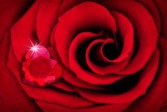 Wibrujący rewolucjonistki róży zakończenie W górę Makro- z Rubinowym sercem Obraz Royalty Free