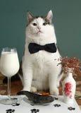 Wichtige Person der Katze sehr im Haustierrestaurant Lizenzfreie Stockbilder