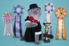 Wichtige schottische Katze mit ihren Preisen an einem lokalisierten backgrou lizenzfreies stockfoto