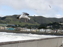Wichury siły wiatr przy Pacifica Kalifornia Obrazy Royalty Free