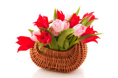 Wicked cane basket tulips Royalty Free Stock Photos