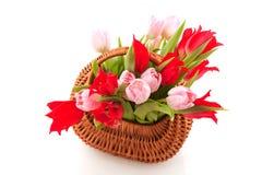 Wicked cane basket tulips Stock Photo