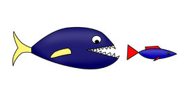 Wicked fish. Pursues after little fish Stock Photo