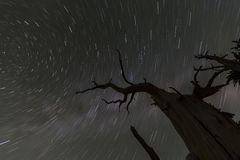 Wicked Tree Star Trails Royalty Free Stock Photos