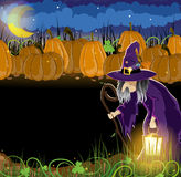Wicked witch and  Halloween pumpkins Royalty Free Stock Images