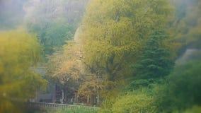Wickeln Sie das Rütteln des Ginkgobaums, des Tempels und des Bambusses, Berge, Hügel stock video footage