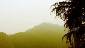 Wickeln Sie das Rütteln des Ginkgobaums und des Bambusses, Berge, Hügel stock video