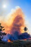 Wickeln Sie den Schlag auf von lodernden Bäumen während eines Waldbrands lizenzfreie stockfotografie