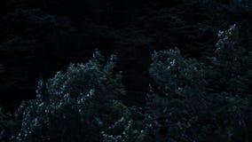 Wickeln Sie den Schlag und die Bewegung der Niederlassungen des Baums stock video footage