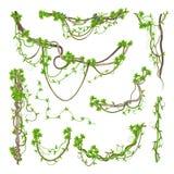 Wickelnde Niederlassungen des Liane- oder Dschungelbetriebsgrüns lizenzfreie abbildung