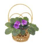 wicker белизны альта цветка Стоковая Фотография