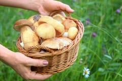 wicker грибов корзины полный Стоковые Изображения RF