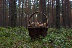 wicker грибов корзины полный Стоковое Фото