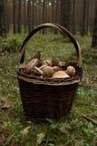 wicker грибов папоротника состава ягод корзины Стоковые Фото