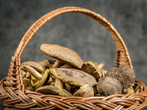 wicker грибов папоротника состава ягод корзины Стоковое фото RF