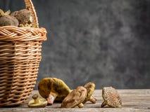 wicker грибов папоротника состава ягод корзины Стоковые Изображения RF