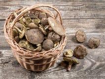 wicker грибов папоротника состава ягод корзины Стоковые Изображения