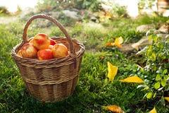 wicker красного цвета корзины яблок Стоковые Фото