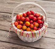 Wicker basked filled with multiple red victoria plums Stock Photos