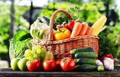 Wicker basket with assorted raw organic vegetables in the garden Stock Photography