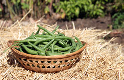 Wicker basket of beans Royalty Free Stock Photo