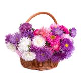 Wicker basket with beautiful flowers asters isolated Royalty Free Stock Image