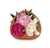 Wicker basket with a bouquet of peonies on a white background Stock Photo