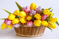 Wicker basket with a bouquet of tulips. A wicker basket with a large bouquet of yellow tulips Stock Photos