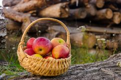 Wicker basket with bright red apples stands on a wooden deck on Royalty Free Stock Photography