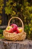 Wicker basket with bright red apples stands on a wooden stump ag Royalty Free Stock Images