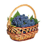 Wicker basket with brushes of dark grapes Stock Images