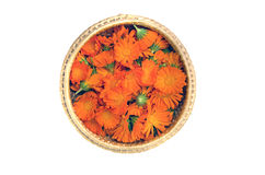Wicker basket with calendula marigold medical flowers isolated Royalty Free Stock Images