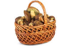 Wicker basket with cepe mushrooms Stock Photo