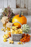 Wicker basket of chanterelle mushrooms Stock Photography