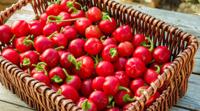 Wicker basket of cherry peppers Royalty Free Stock Photos